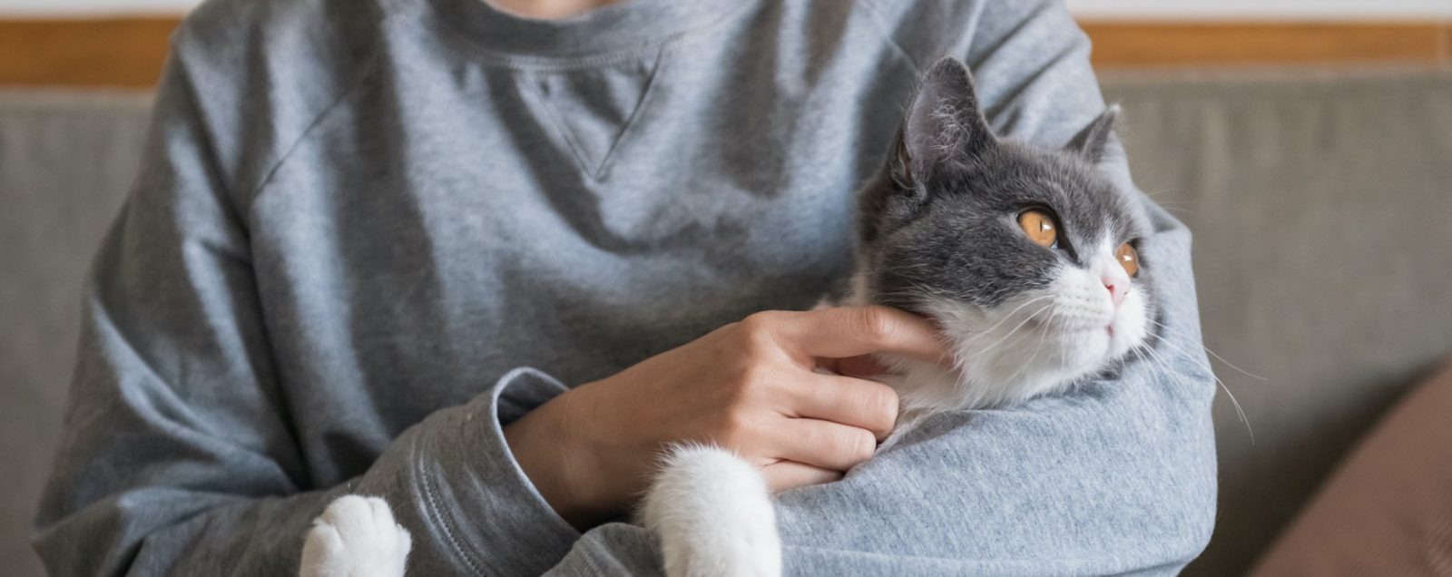 Person holding a grey cat