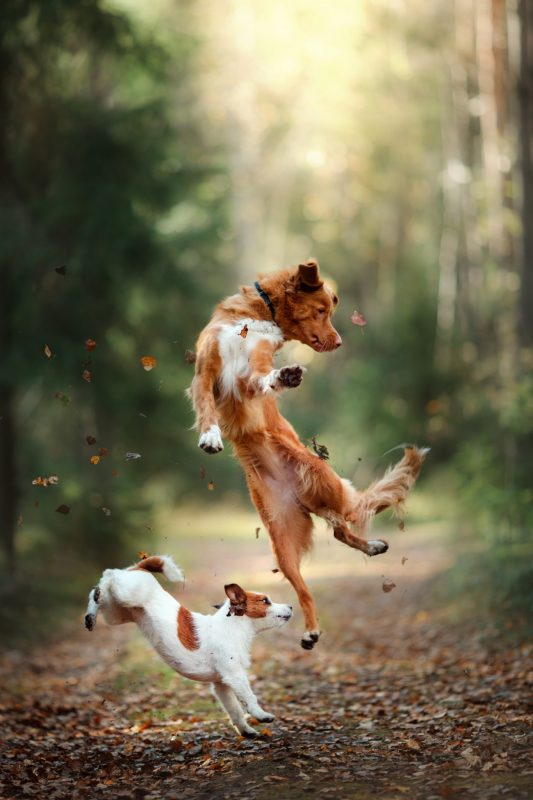 Dogs jumping happily in a forest